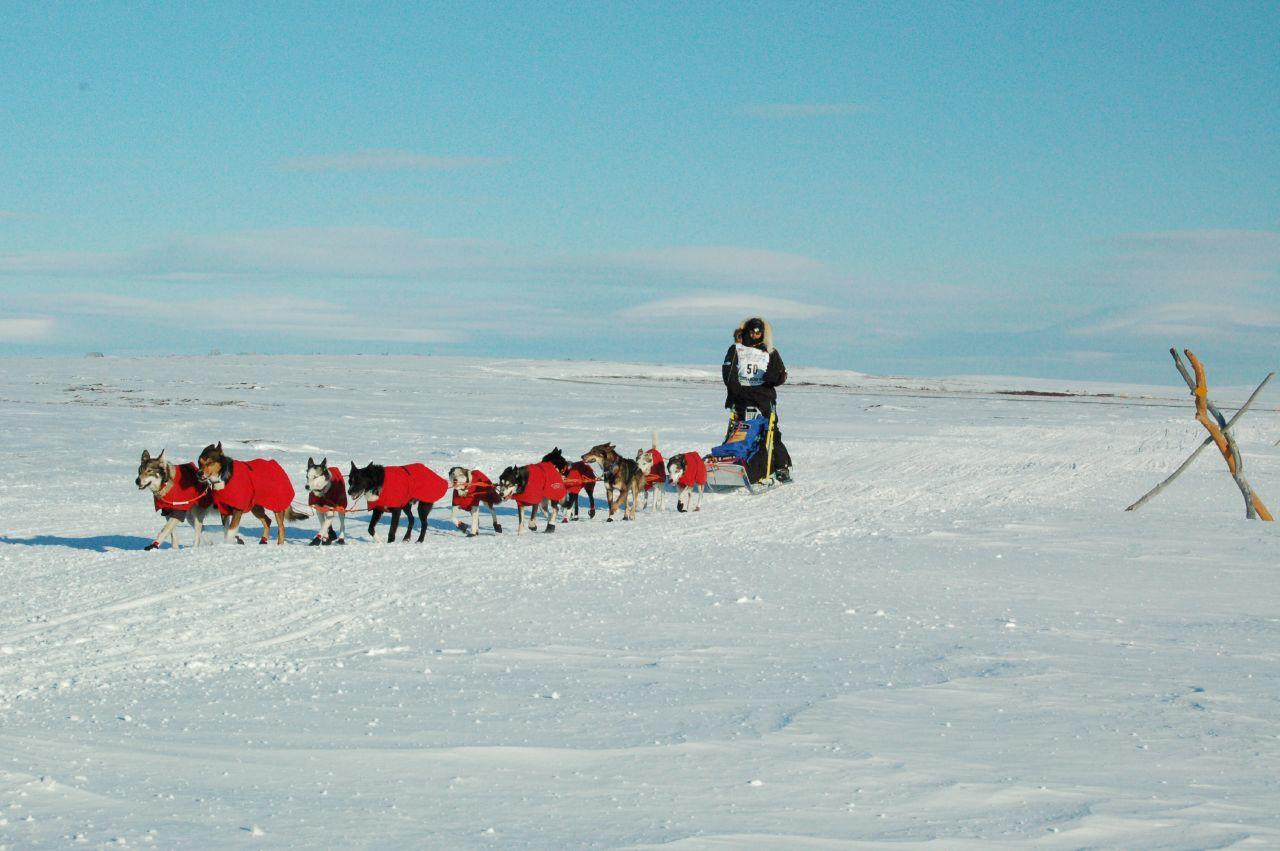 Robert Sorlie and Iditarod team near Nome