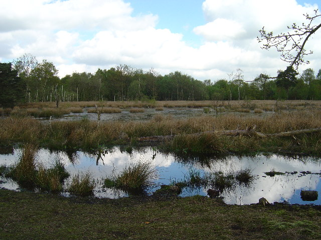 Skipwith Common - geograph.org.uk - 6764