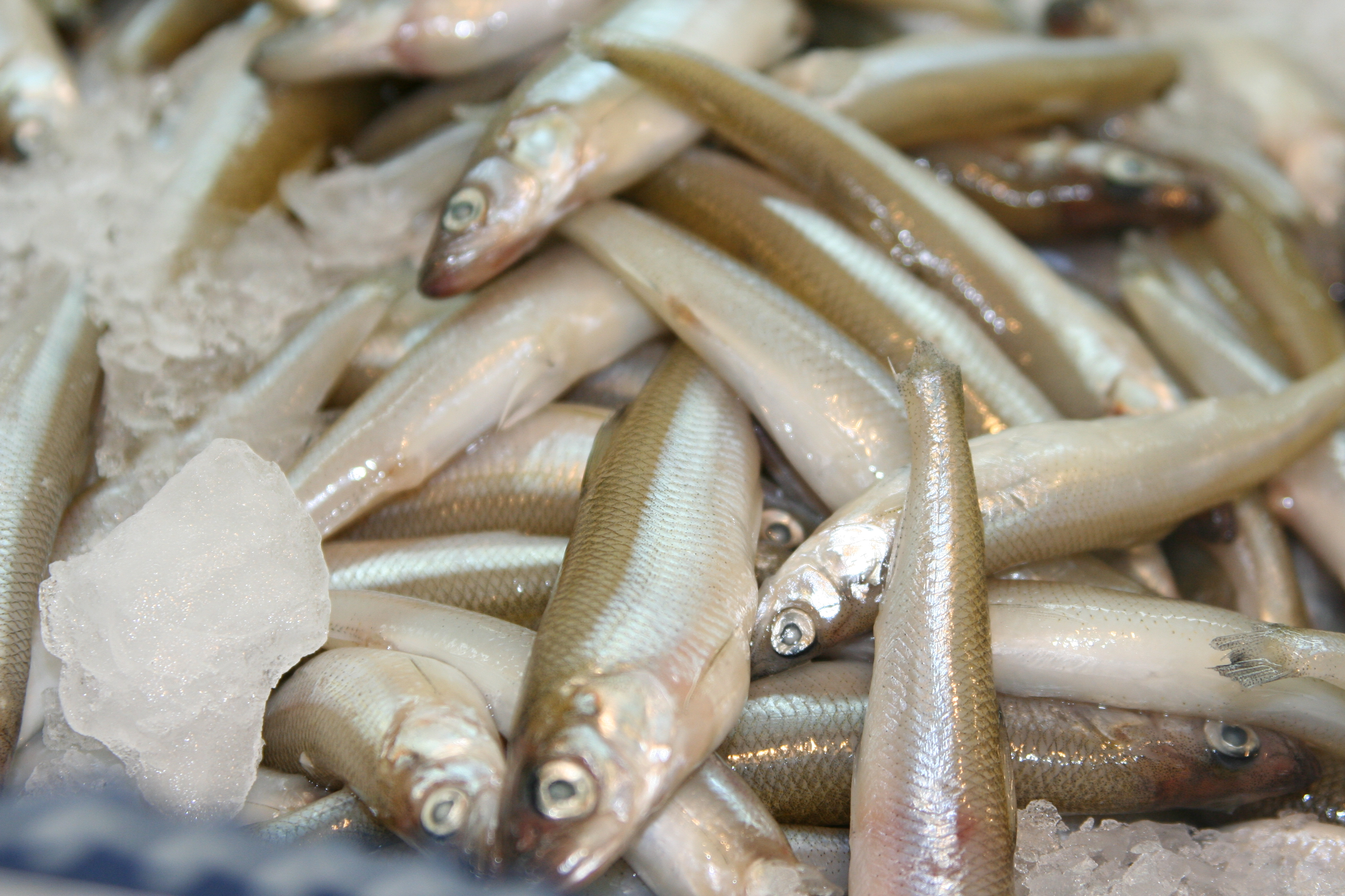 File wikimedia commons for Where to buy fish
