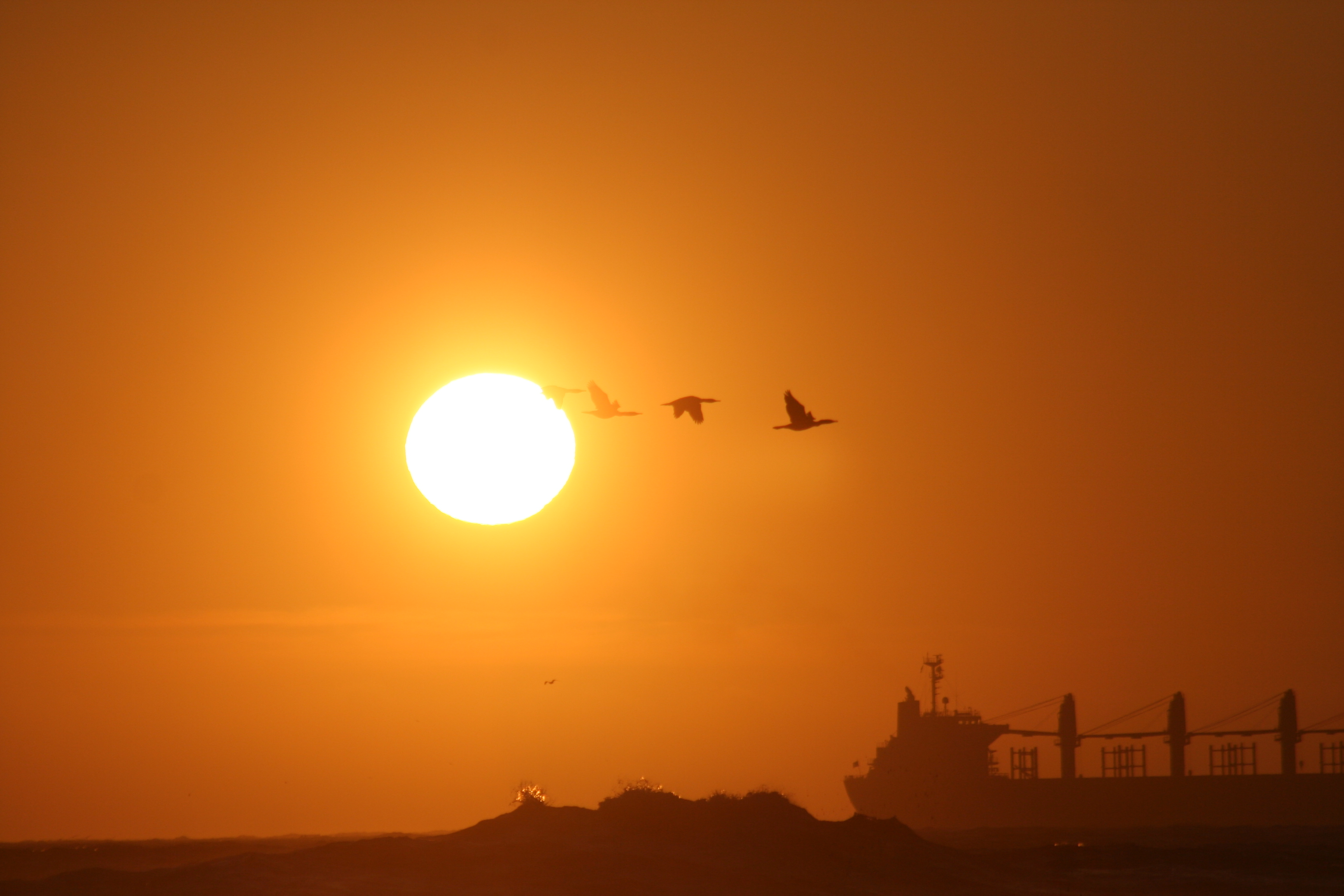 File Sunset With Birds