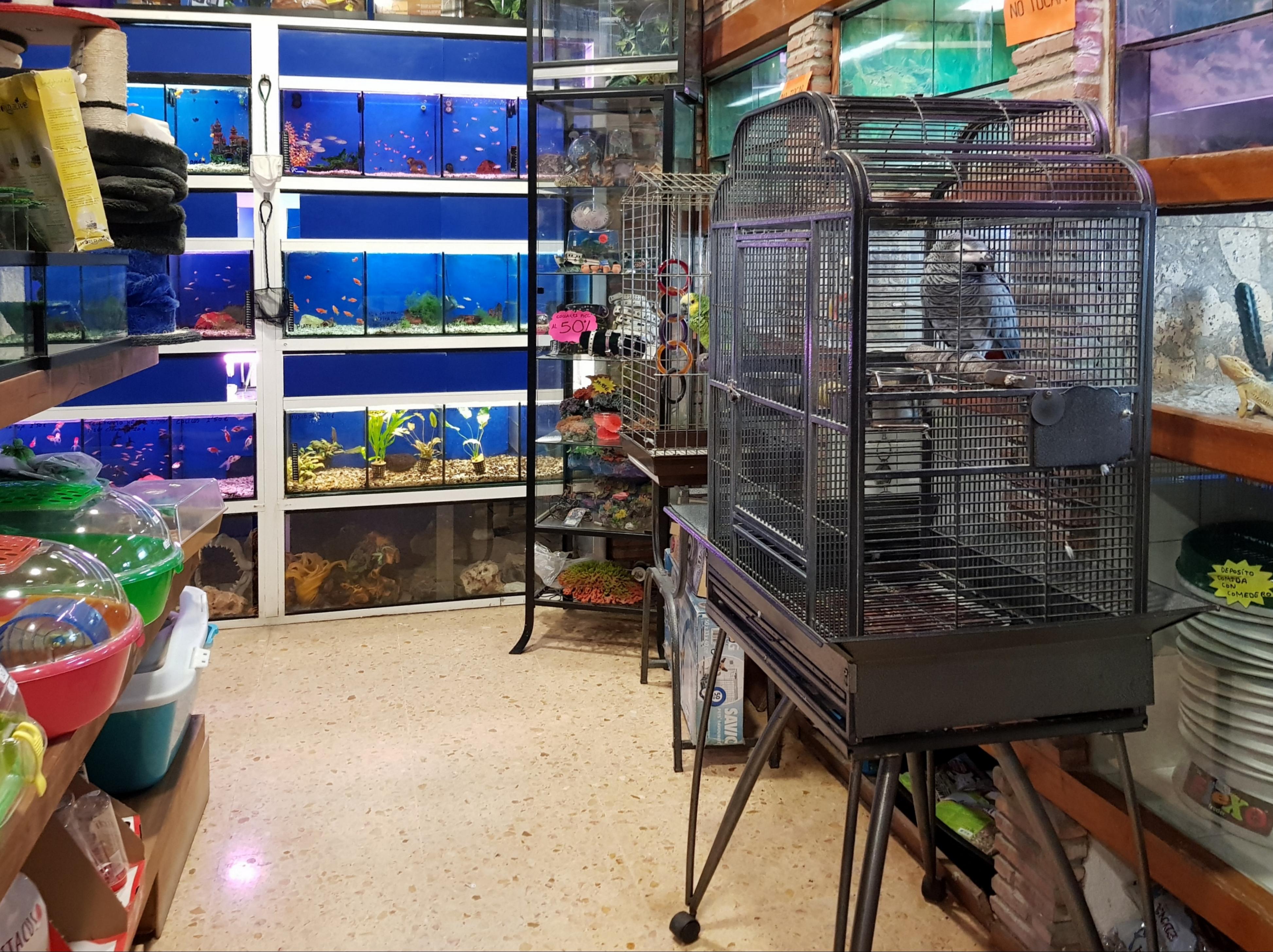 d'animals al carrer de Manuel Candela, València.jpg Català: Tenda d'animals al carrer de Manuel Candela, València. Date 5 October 2018, 19:07:15 Source