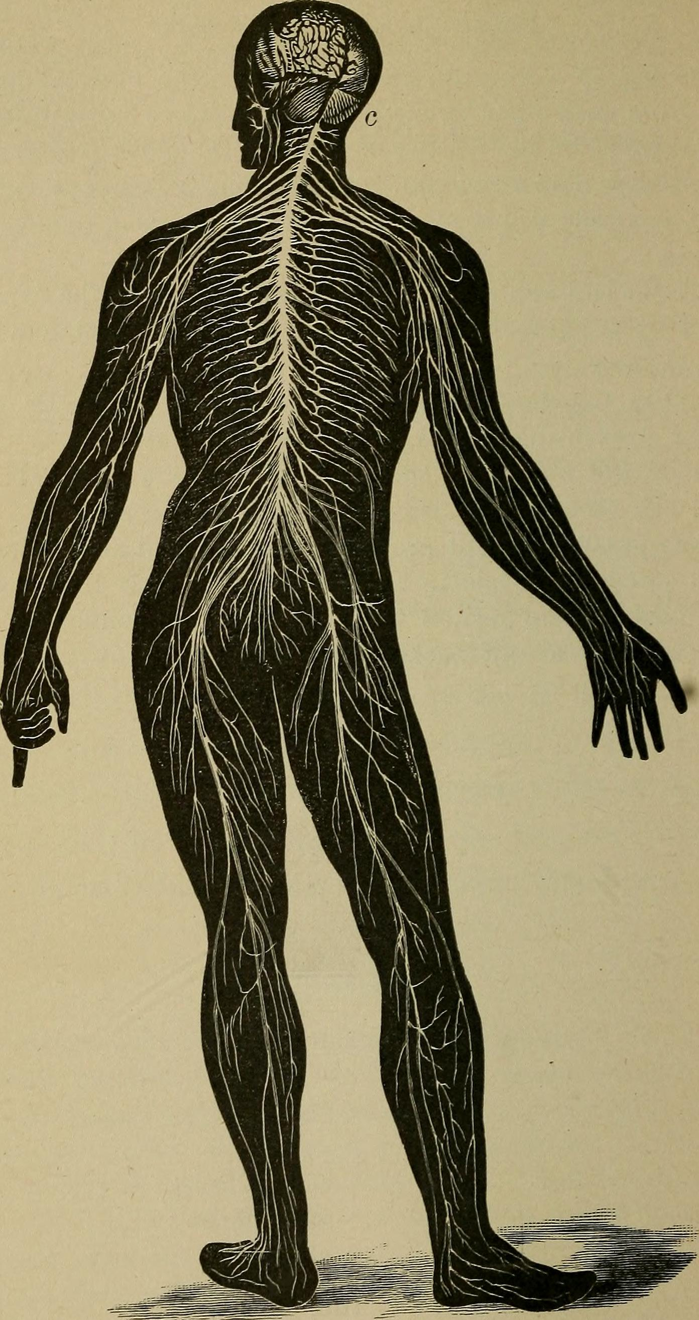 File:The human body and health - an elementary text-book of ...