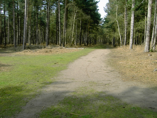 Tracks Crossing in Rowney Warren Wood - geograph.org.uk - 400445