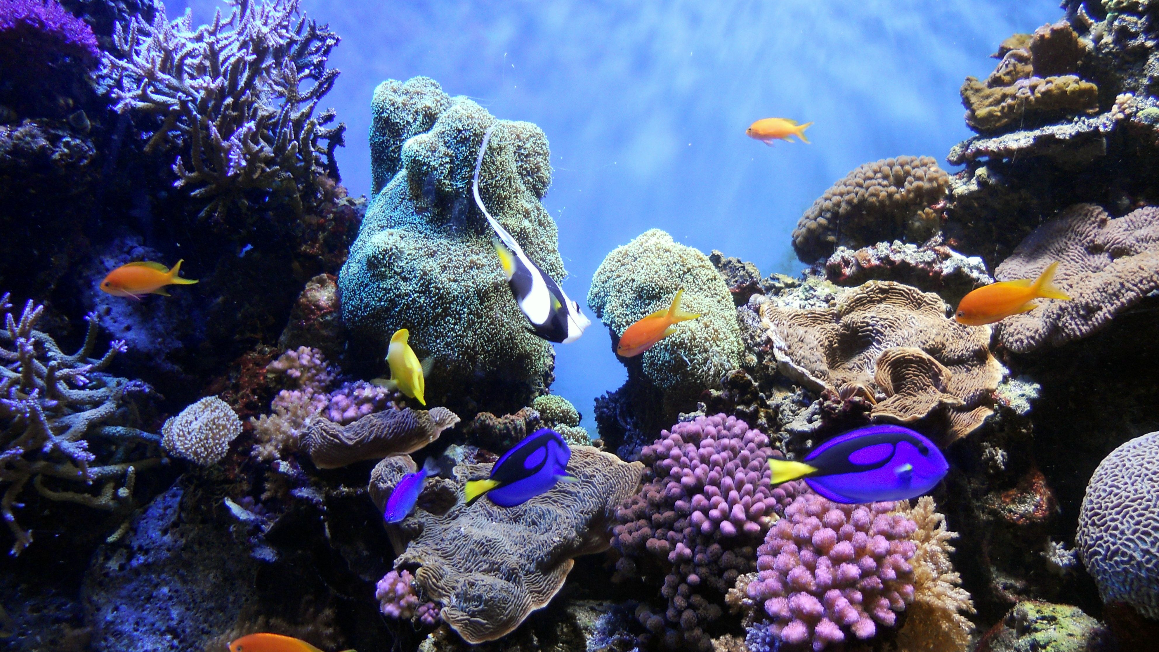 The next Finding Nemo movie will have the fishes finding a new home. But they will die first. Because there are no more reefs left.