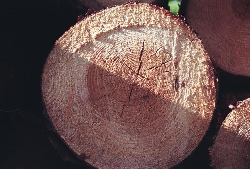 2f0d7c724 خشب - ويكيبيديا، الموسوعة الحرة