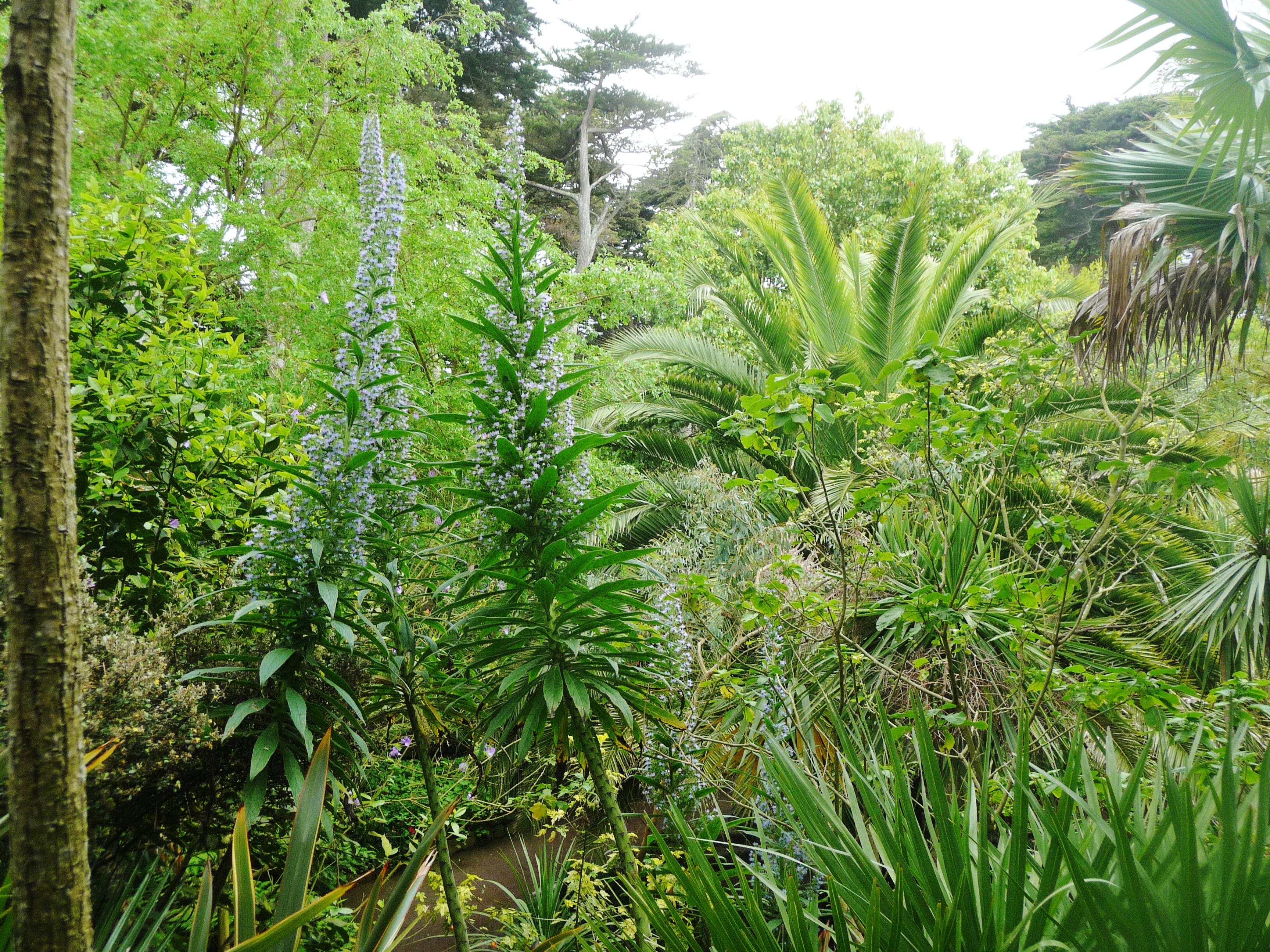 File le de batz 035 jardin georges delaselle jpg for Jardin georges delaselle