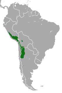 File:Andean Mountain Cat area.png - Wikimedia Commons