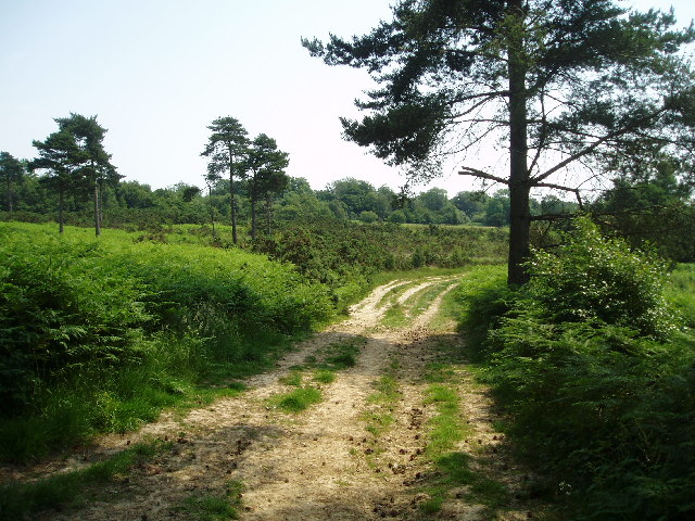 Ashdown Forest - geograph.org.uk - 21219