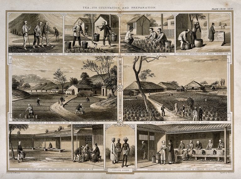 This 1850 engraving shows the different stages...