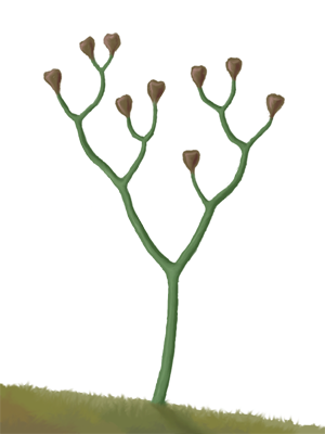 hortusbrambonii Avatar