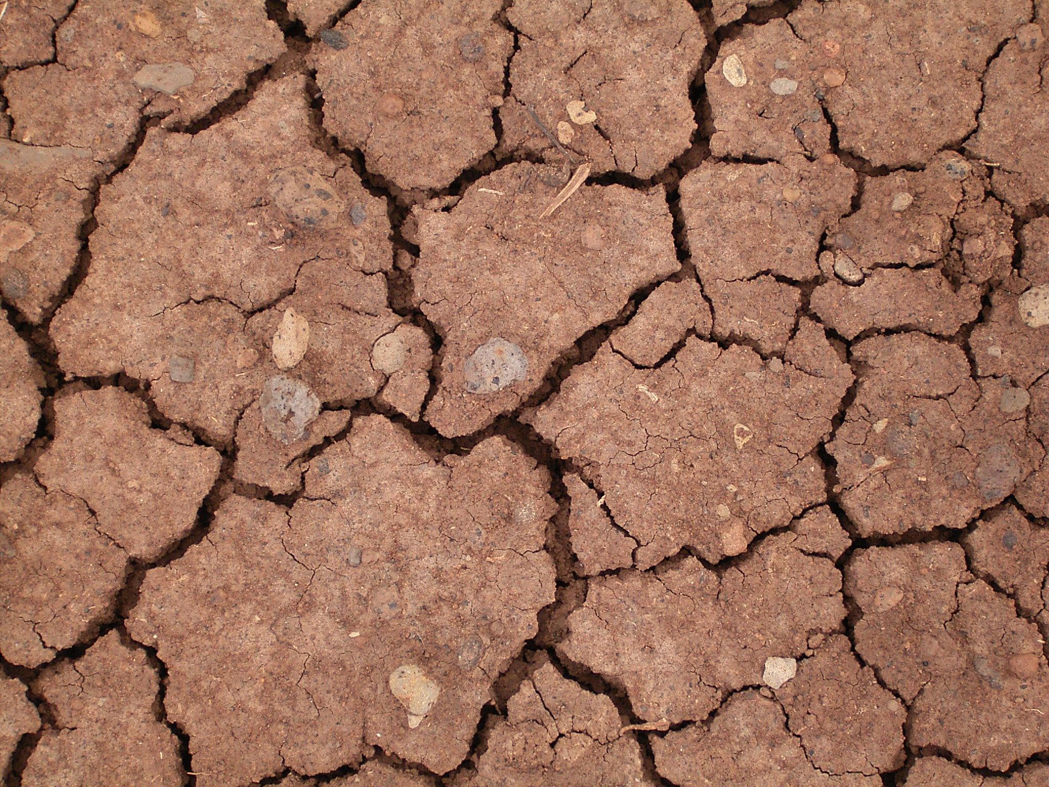 File:Dried mud (La Fajana) 01 ies.jpg - Wikipedia