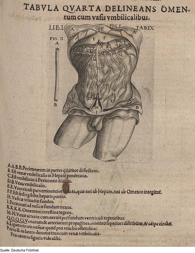 File:Fotothek df tg 0006553 Biologie ^ Anatomie ^ Mensch.jpg ...