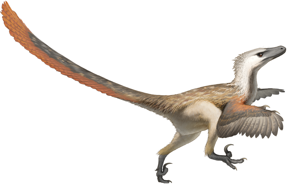 file fred wierum velociraptor png wikipedia