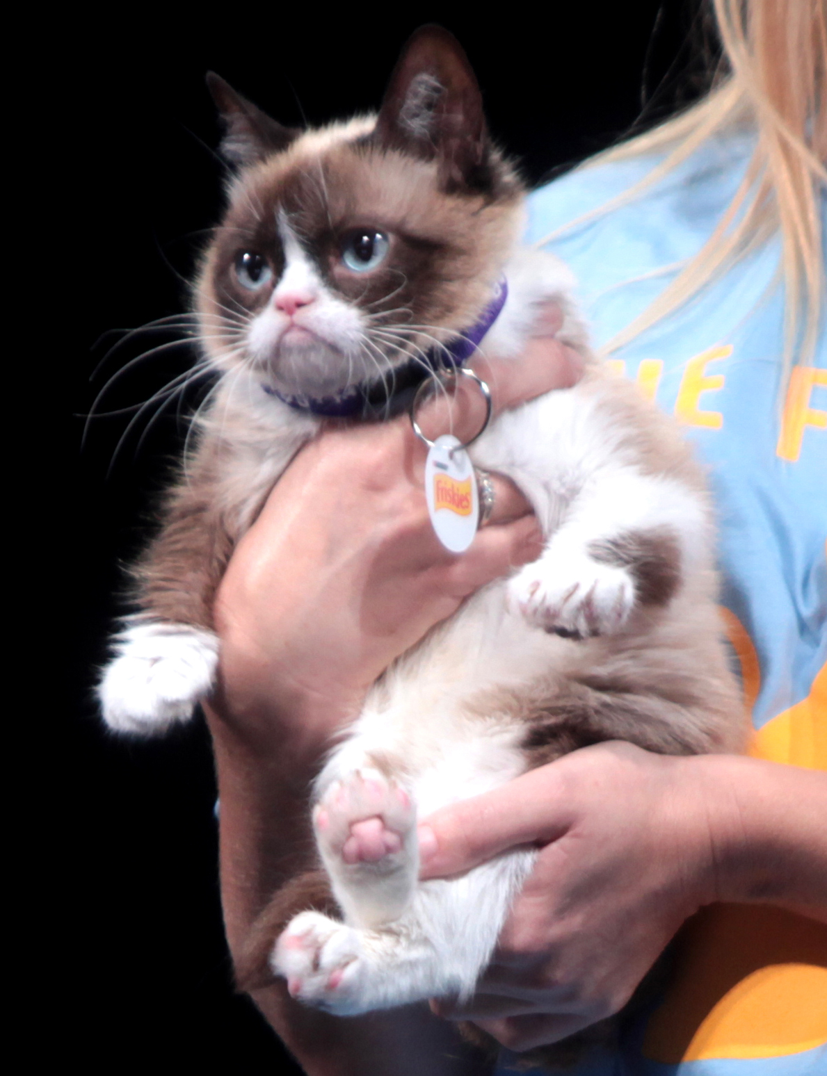 Grumpy Cat Wikipedia - 21 cats losing fight against technology