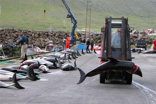 Grateful for Dauphin island sperm whale photo