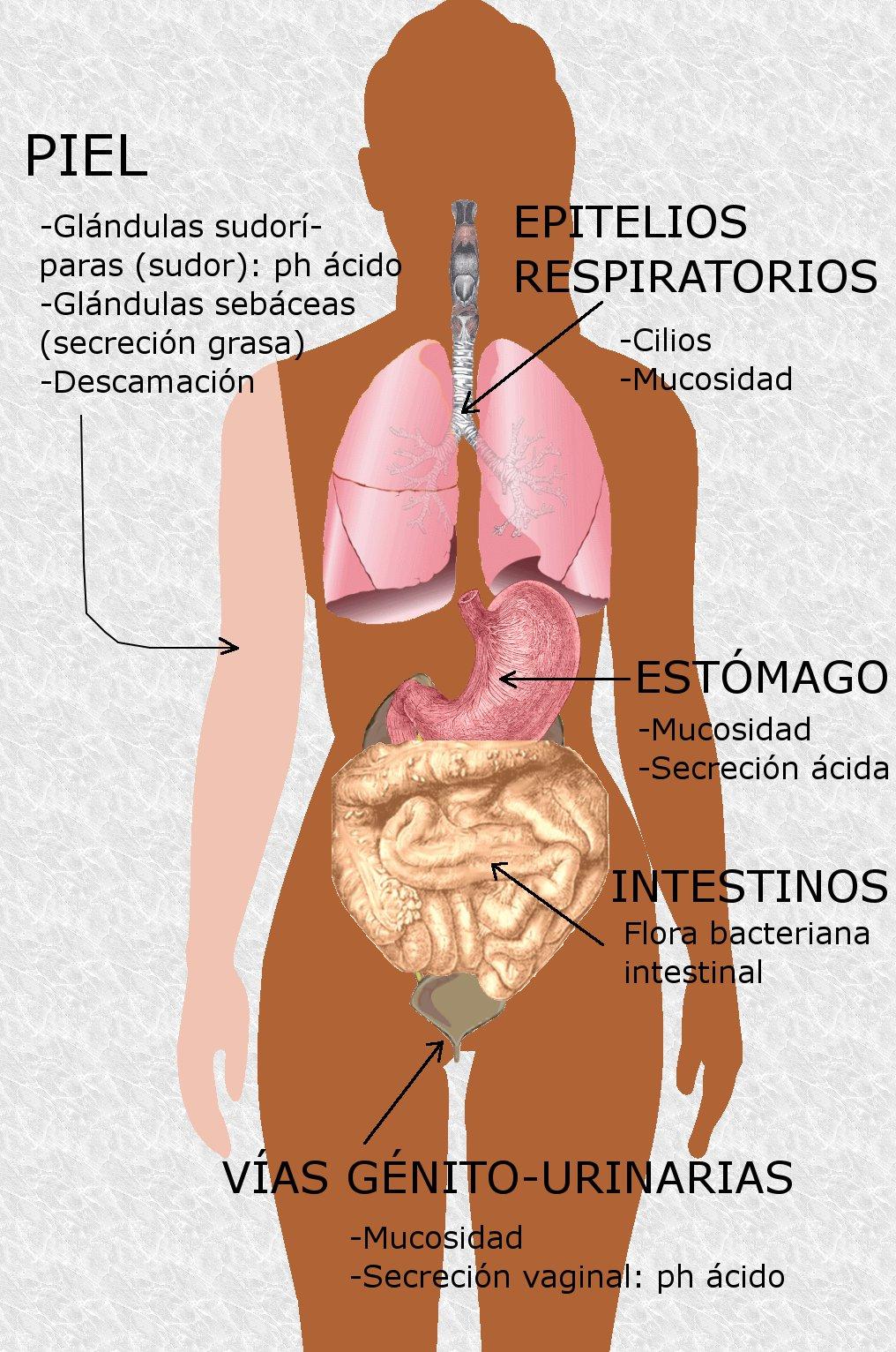 Único Anatomía Y Fisiología Revelaron 3.0 Descarga Gratuita ...