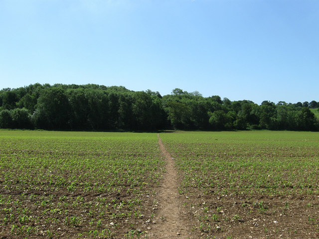 Jewshead Wood - geograph.org.uk - 1329250