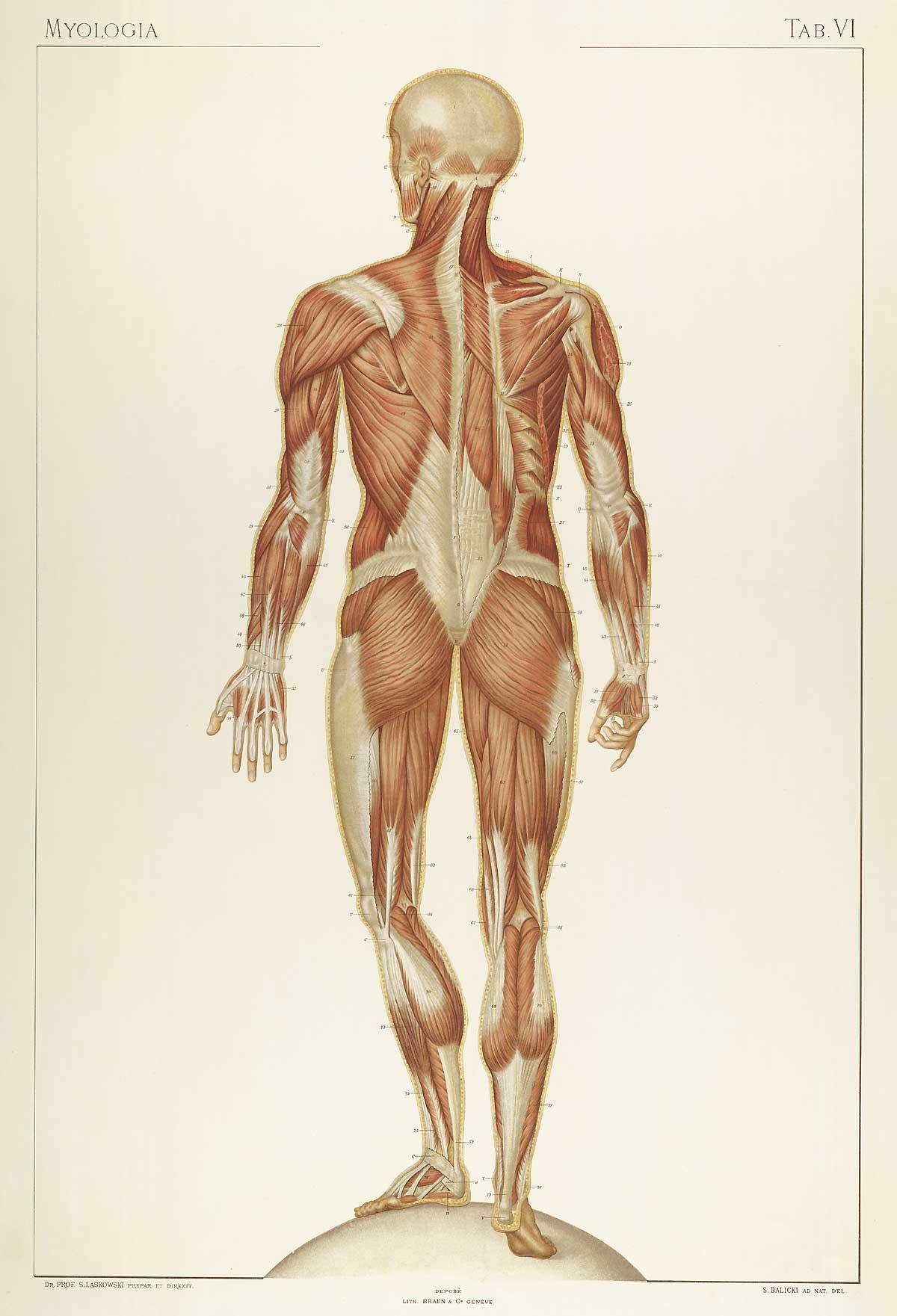 Großzügig Körperregionen In Der Anatomie Ideen - Anatomie Von ...