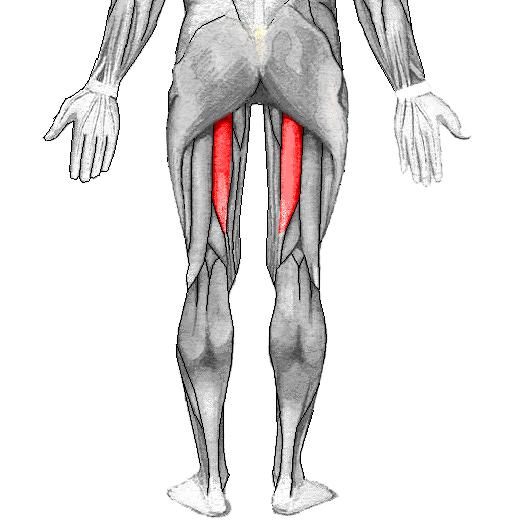 dolore muscolare del pectino