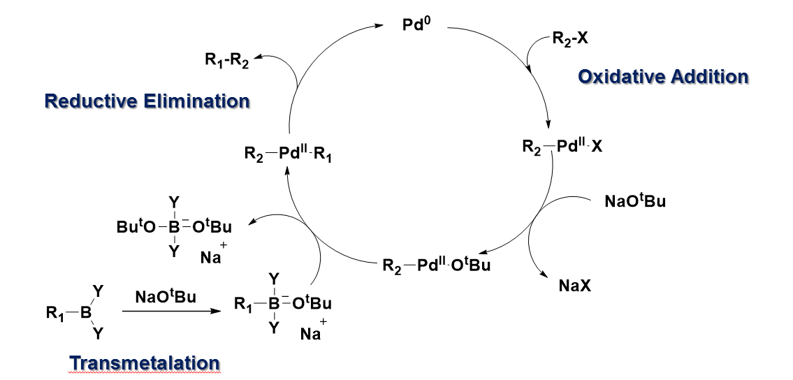 File:Mechanism of Suzuki coupling reaction.png - Wikimedia Commons