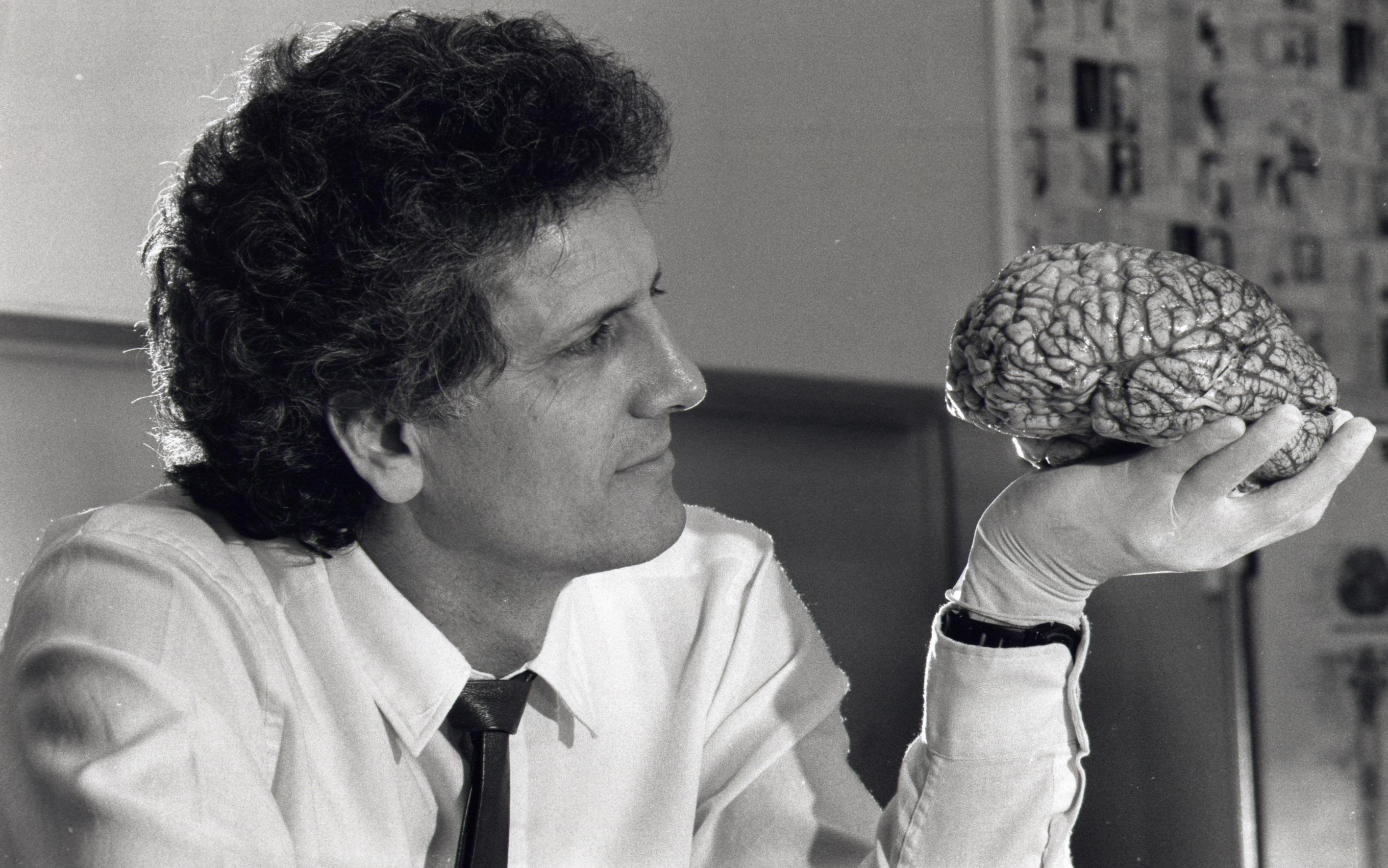 ‼ Descubren una región oculta en el cerebro humano
