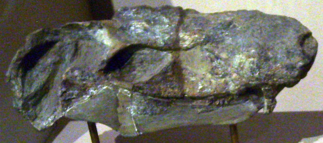Pristerognathus minor.jpg
