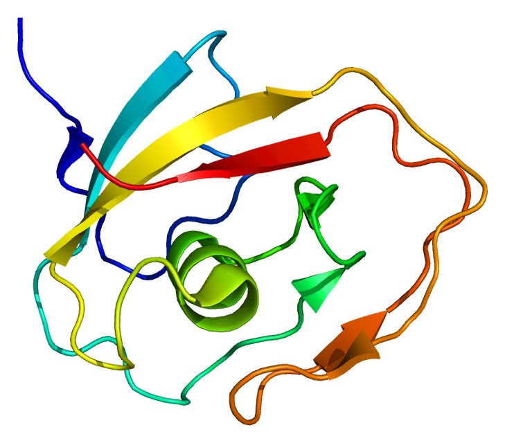 Cartilage oligomeric matrix protein