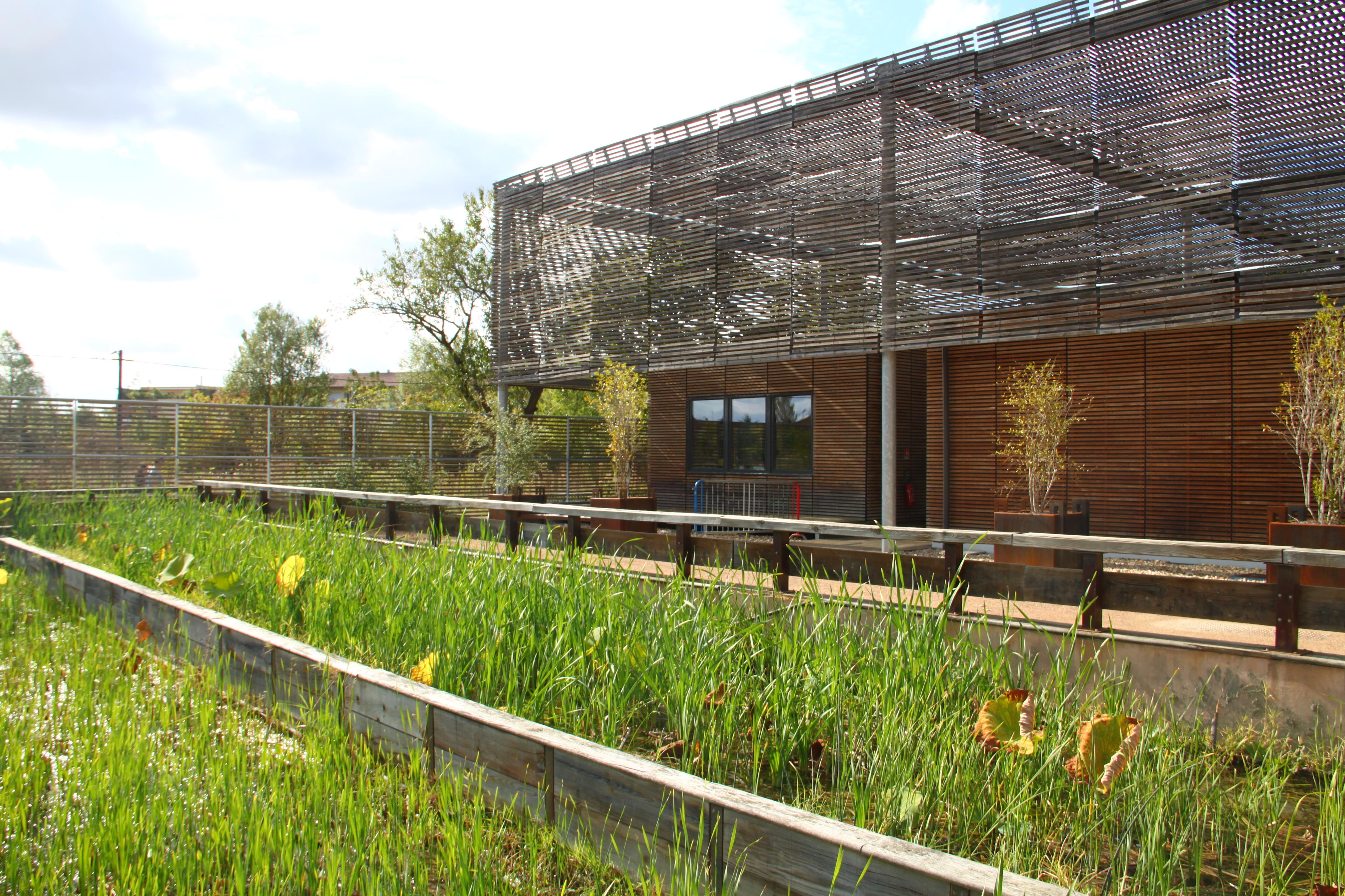 File Rizi¨re jardin du muséum de Toulouse JPG Wikimedia mons