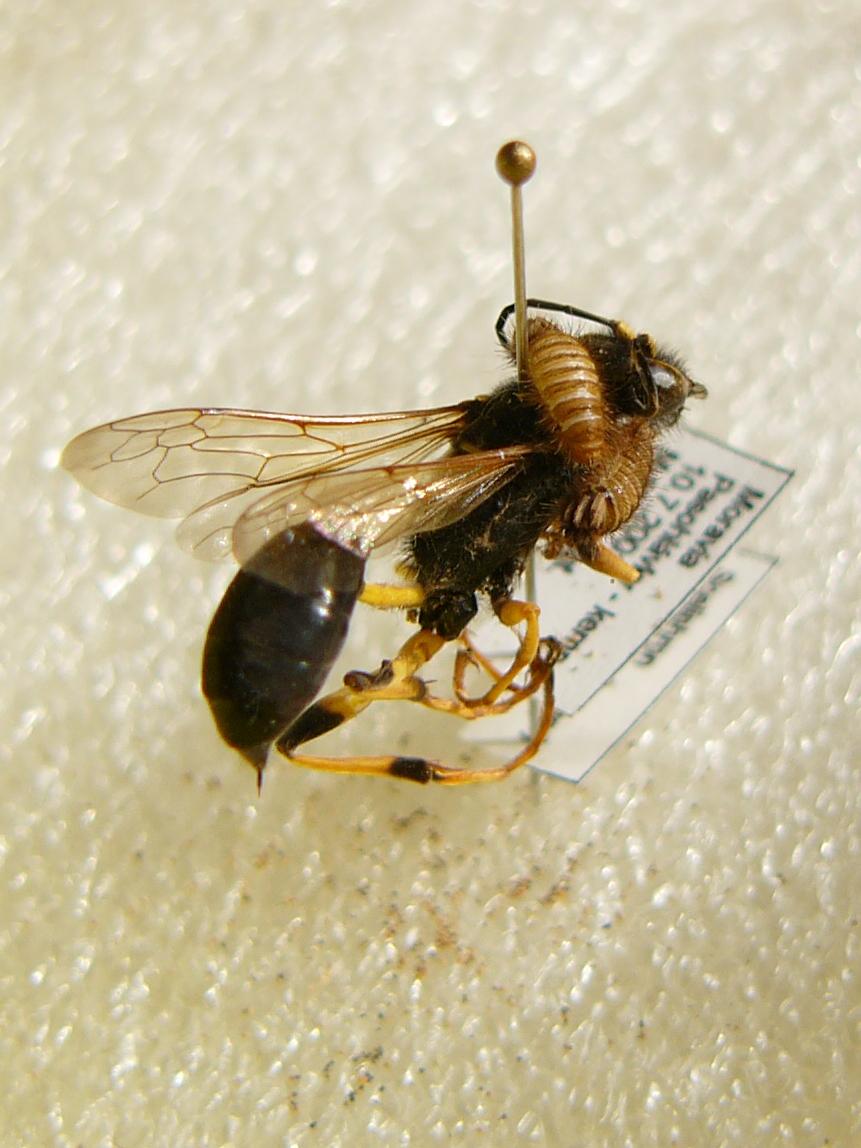 Pest (organism) - Wikipedia