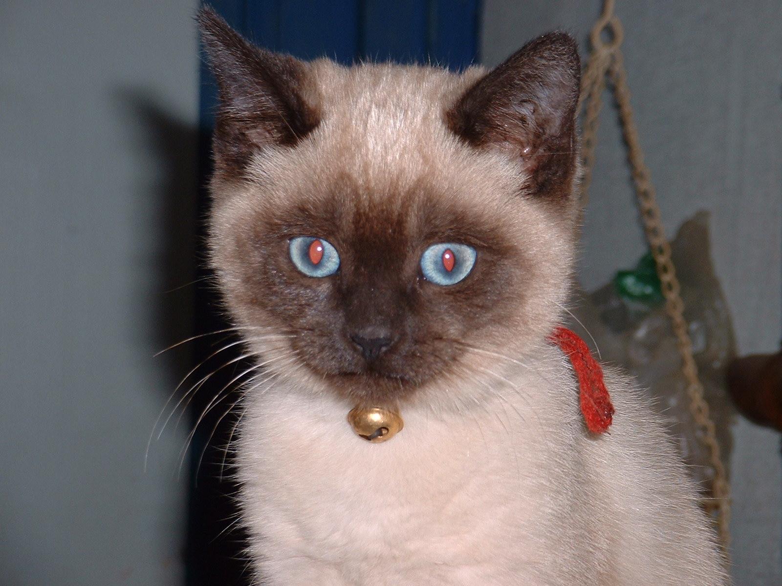 Cat Eye Scratch Infection