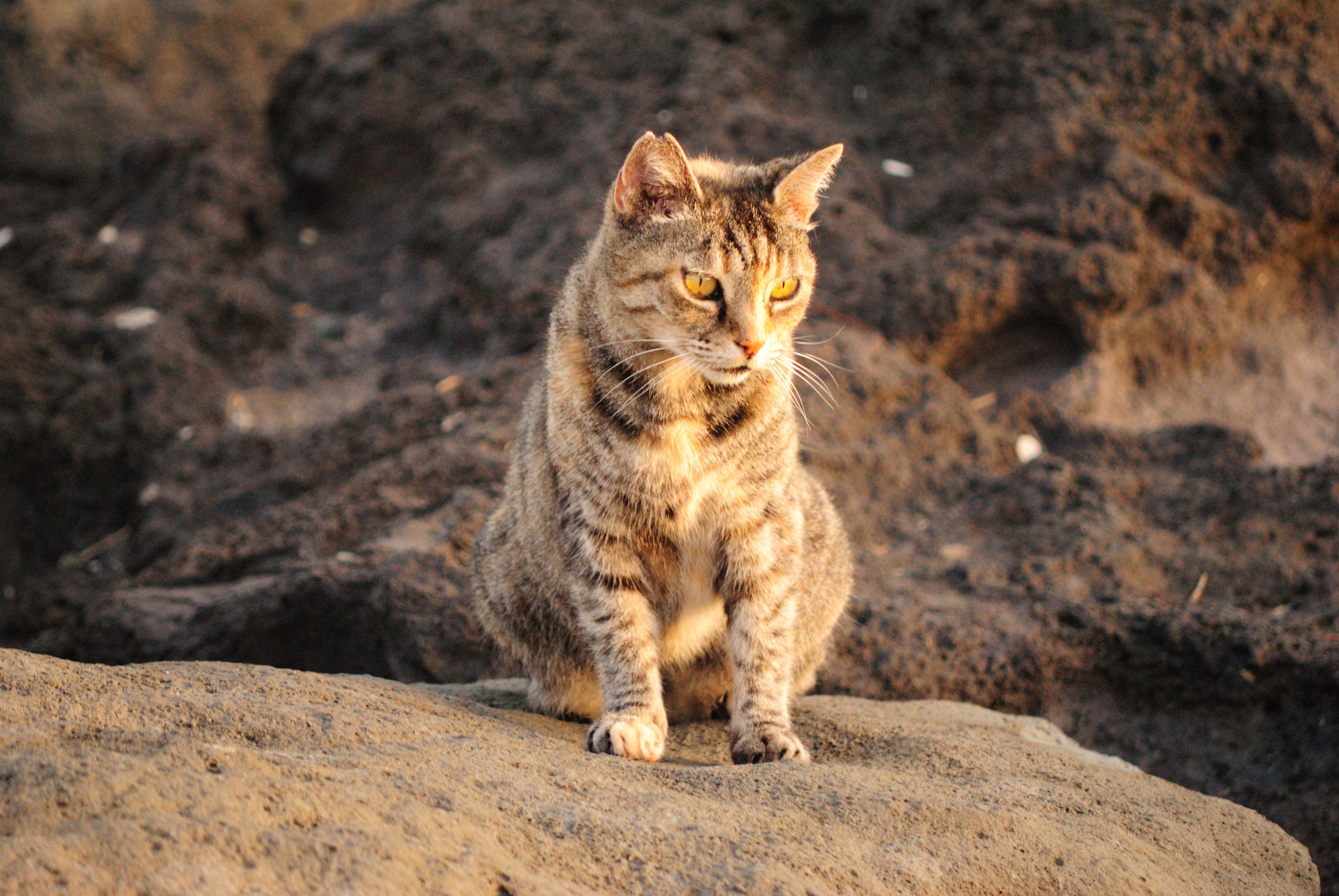 Cat Daps Human