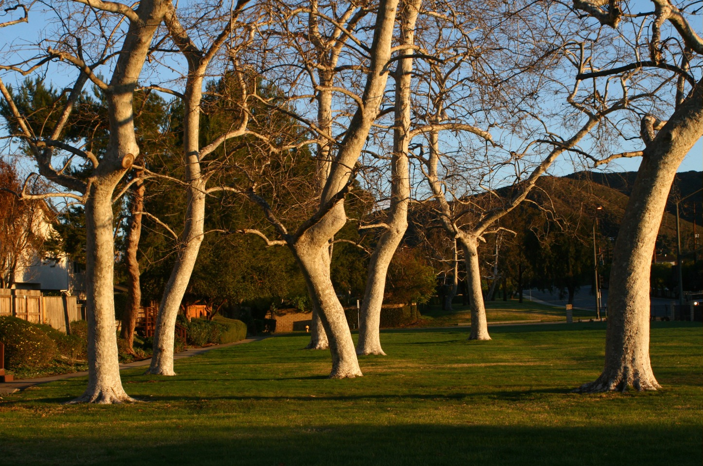 File trees casa conejo wikipedia - Casa conejo ...