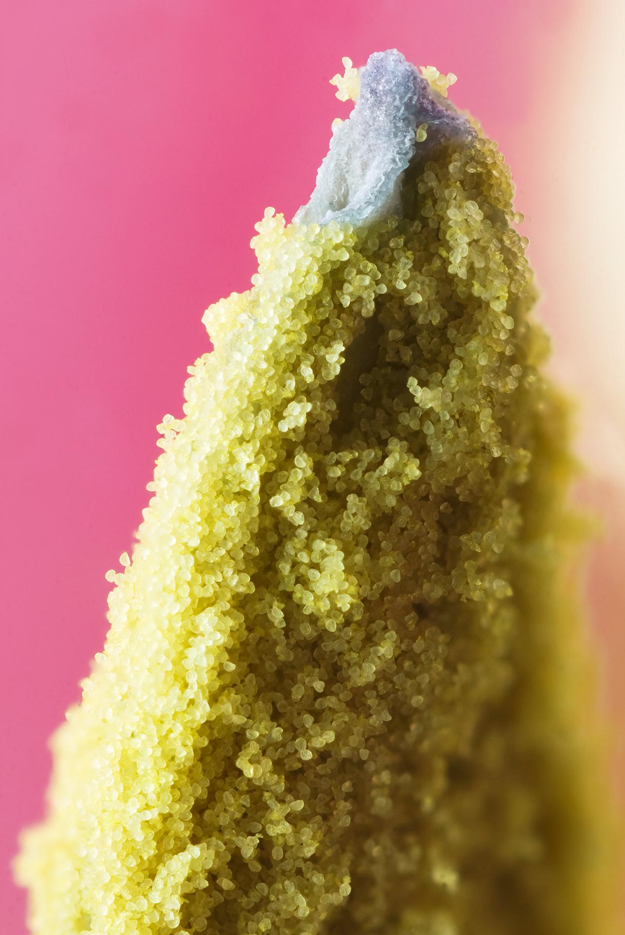Pollen - Wikipedia