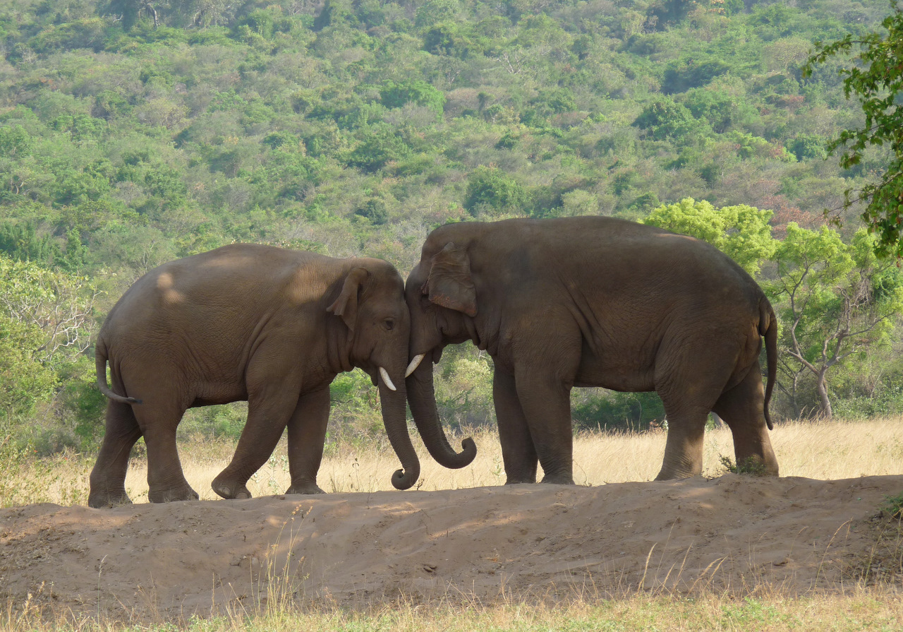 Image result for Two elephants
