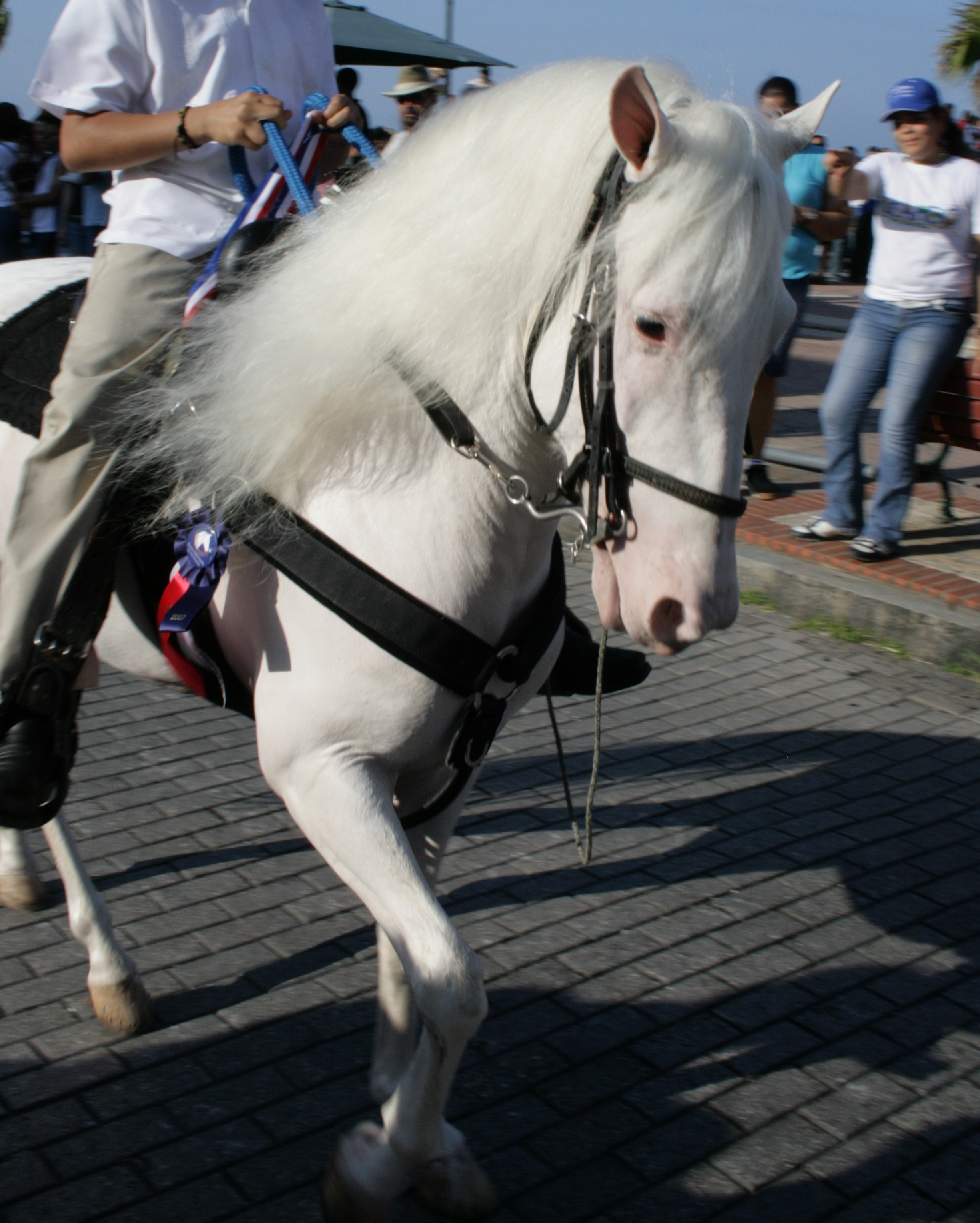 White Horse Wikiwand