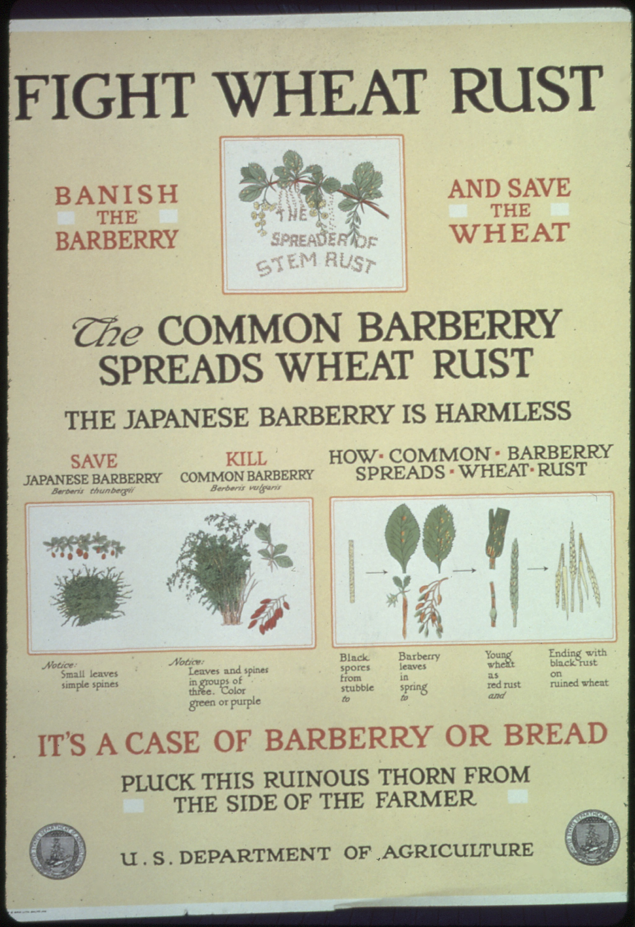 poster about barberry removal