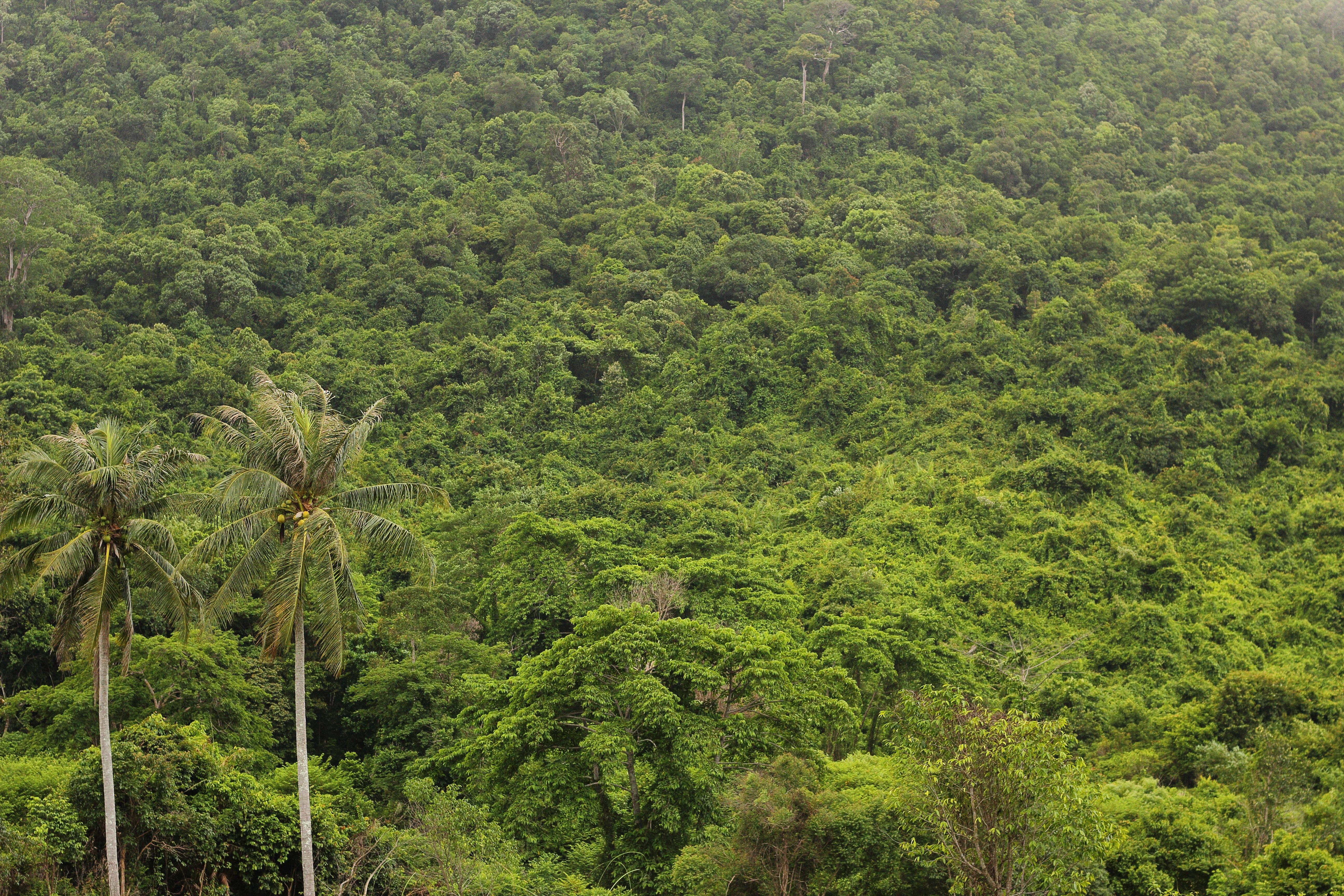 Dschungel In Afrika