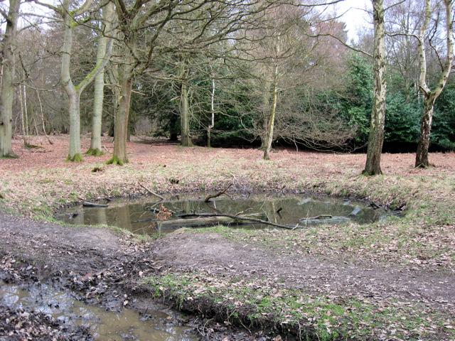 A Round Woodland Pond at Ashridge - geograph.org.uk - 1193810