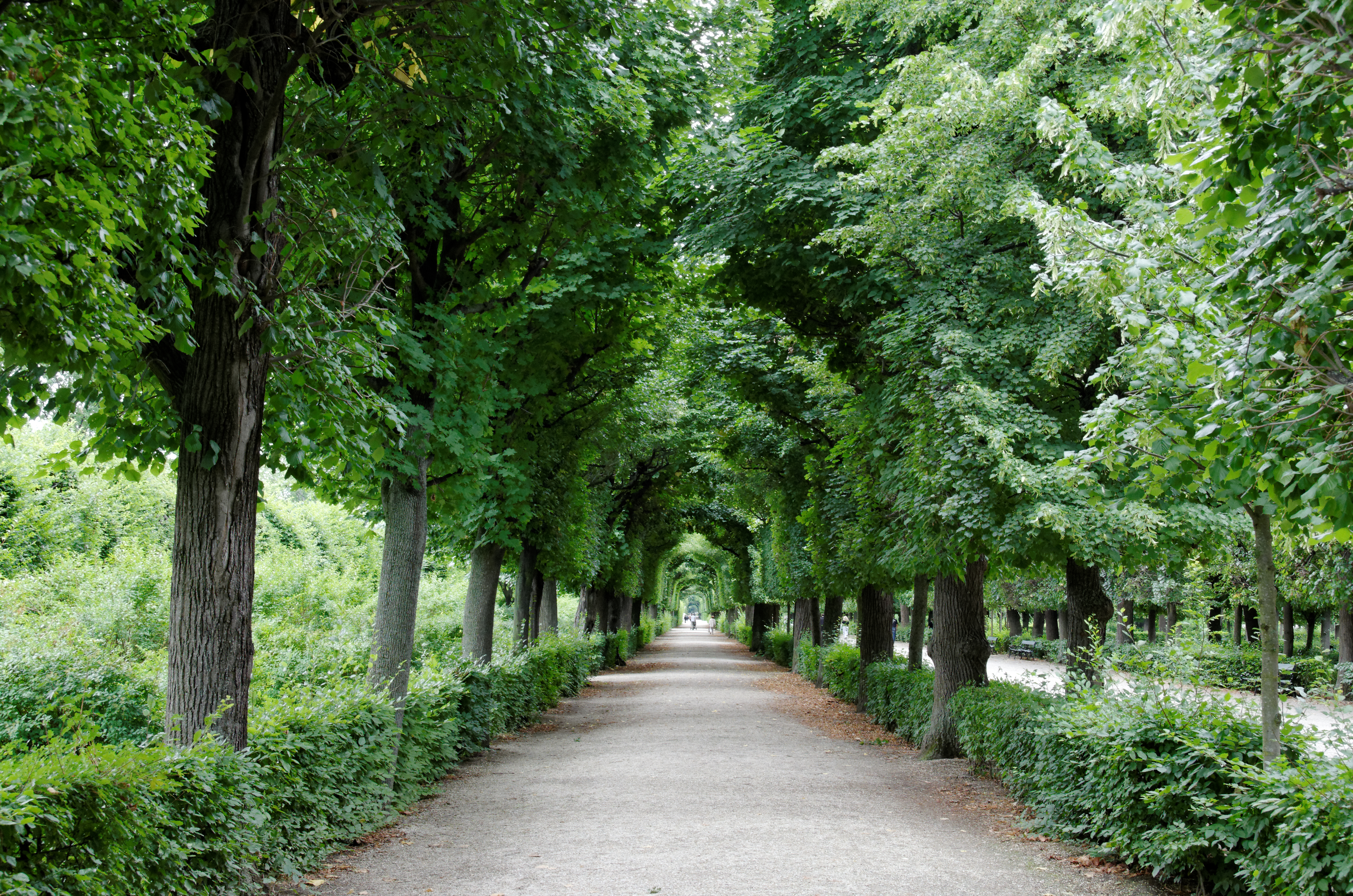File Allée jardin Schönbrunn Wikimedia mons