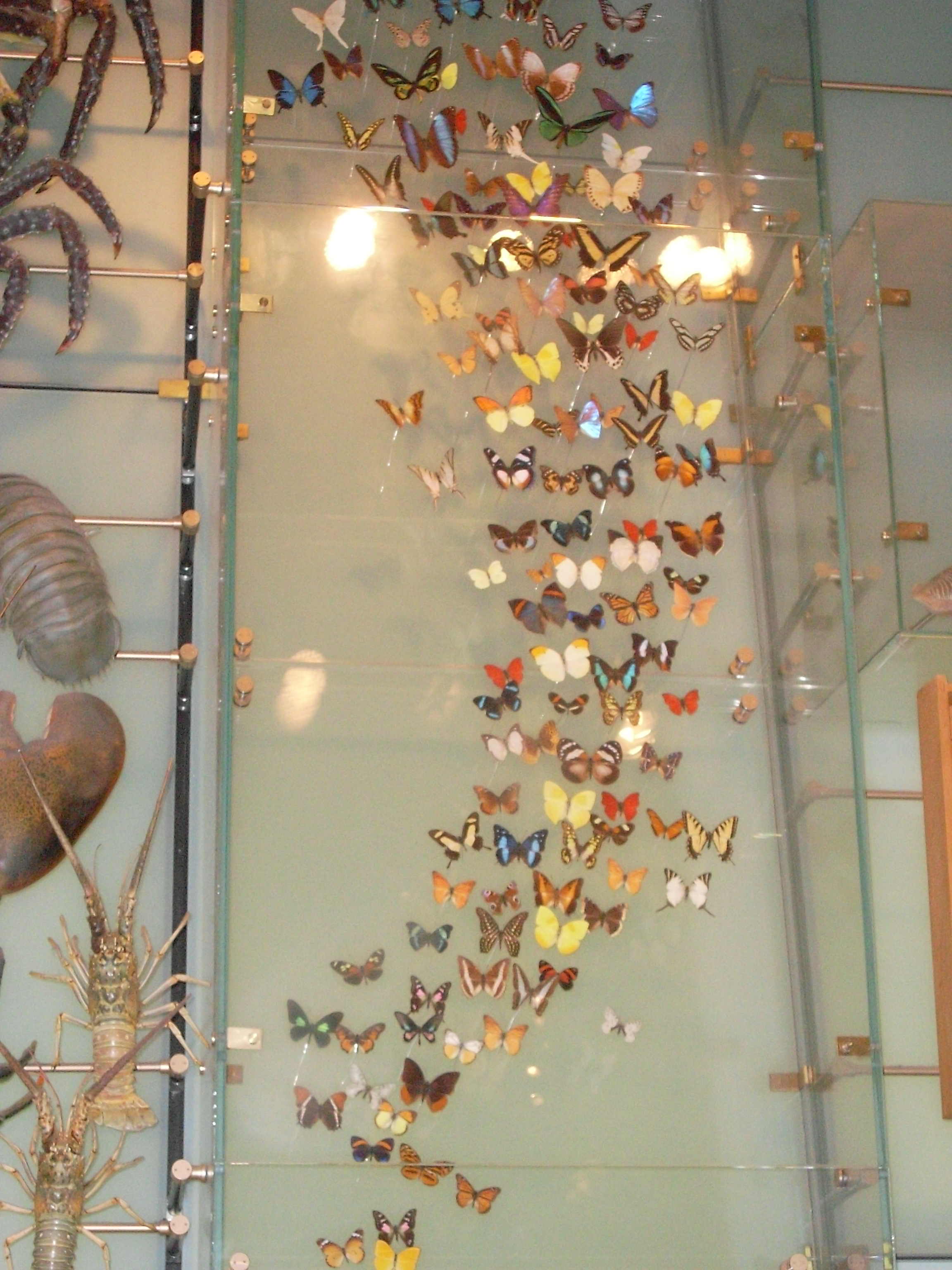 Butterfly Exhibit At Natural History Museum