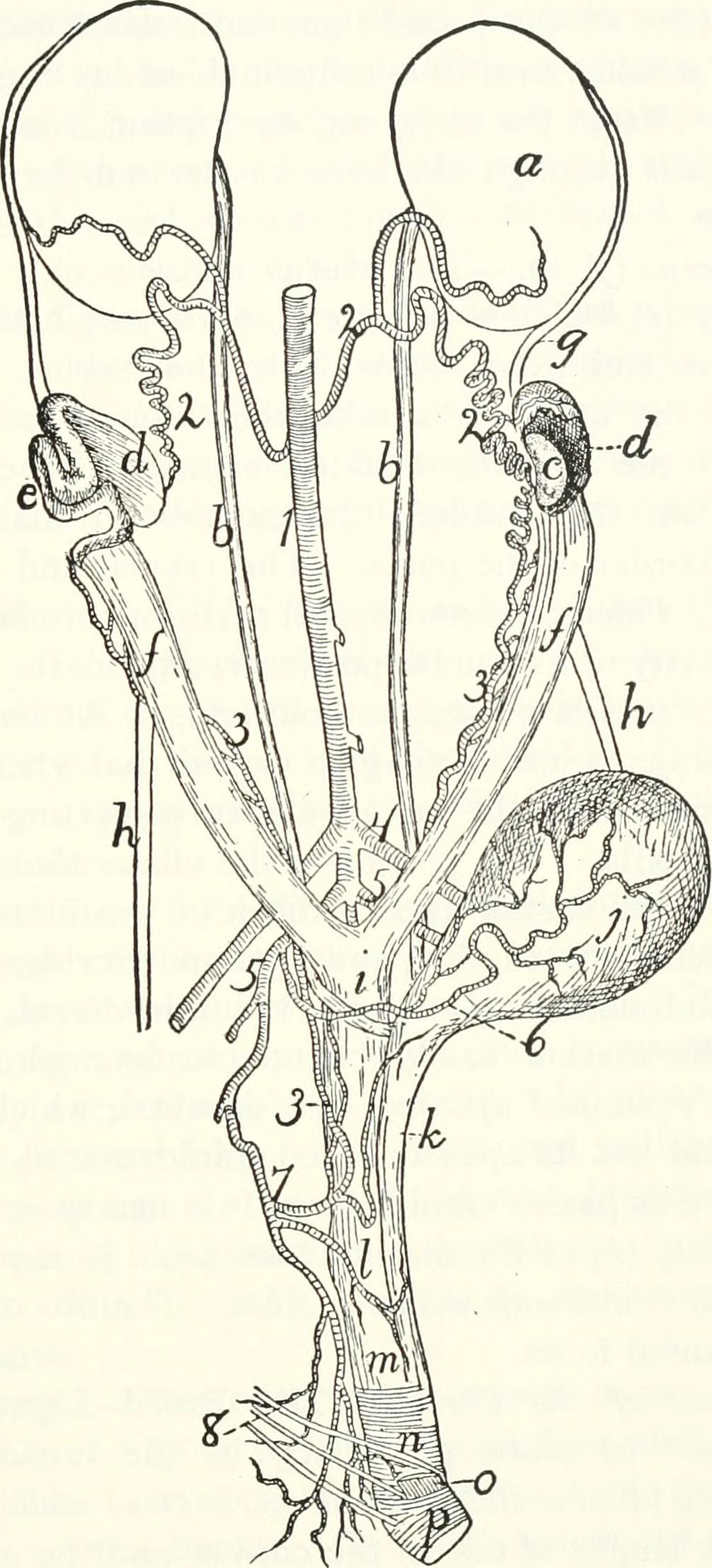 File:Anatomy of the cat (1991) (17571535364).jpg - Wikimedia Commons