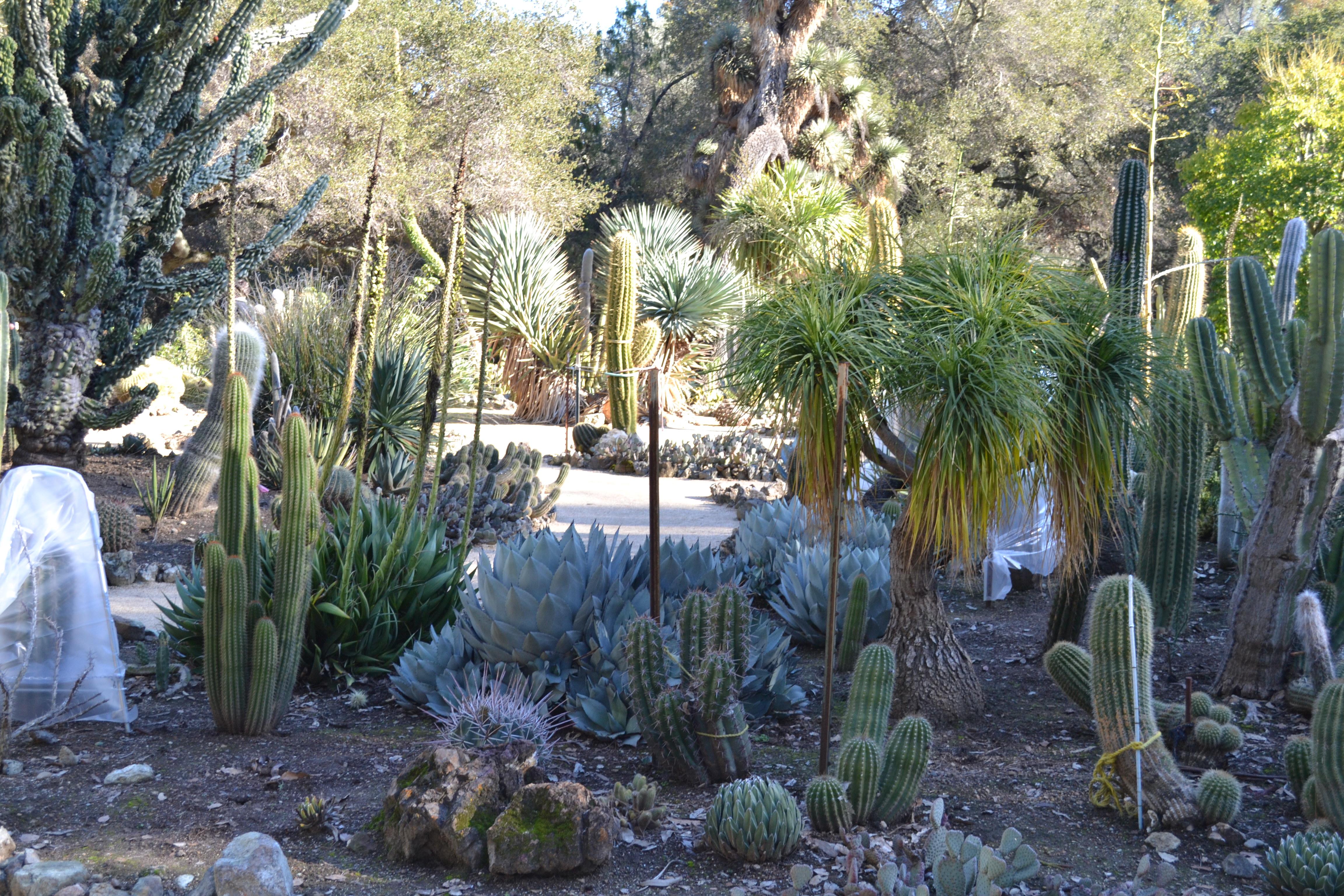 Merveilleux File:Arizona Cactus Garden At Stanford University 5.JPG