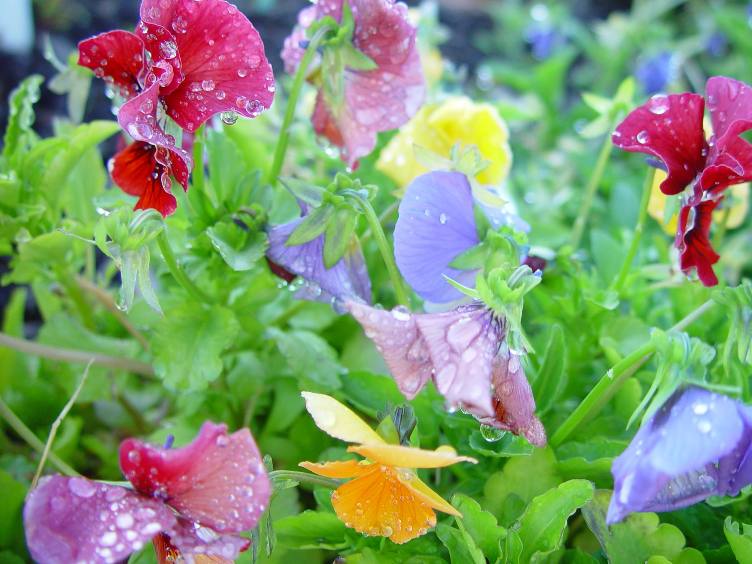 File Colourful flowers
