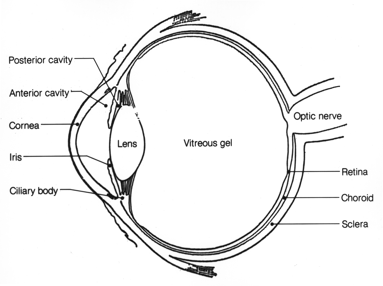 Gecko Eye Diagram Electrical Work Wiring Diagram