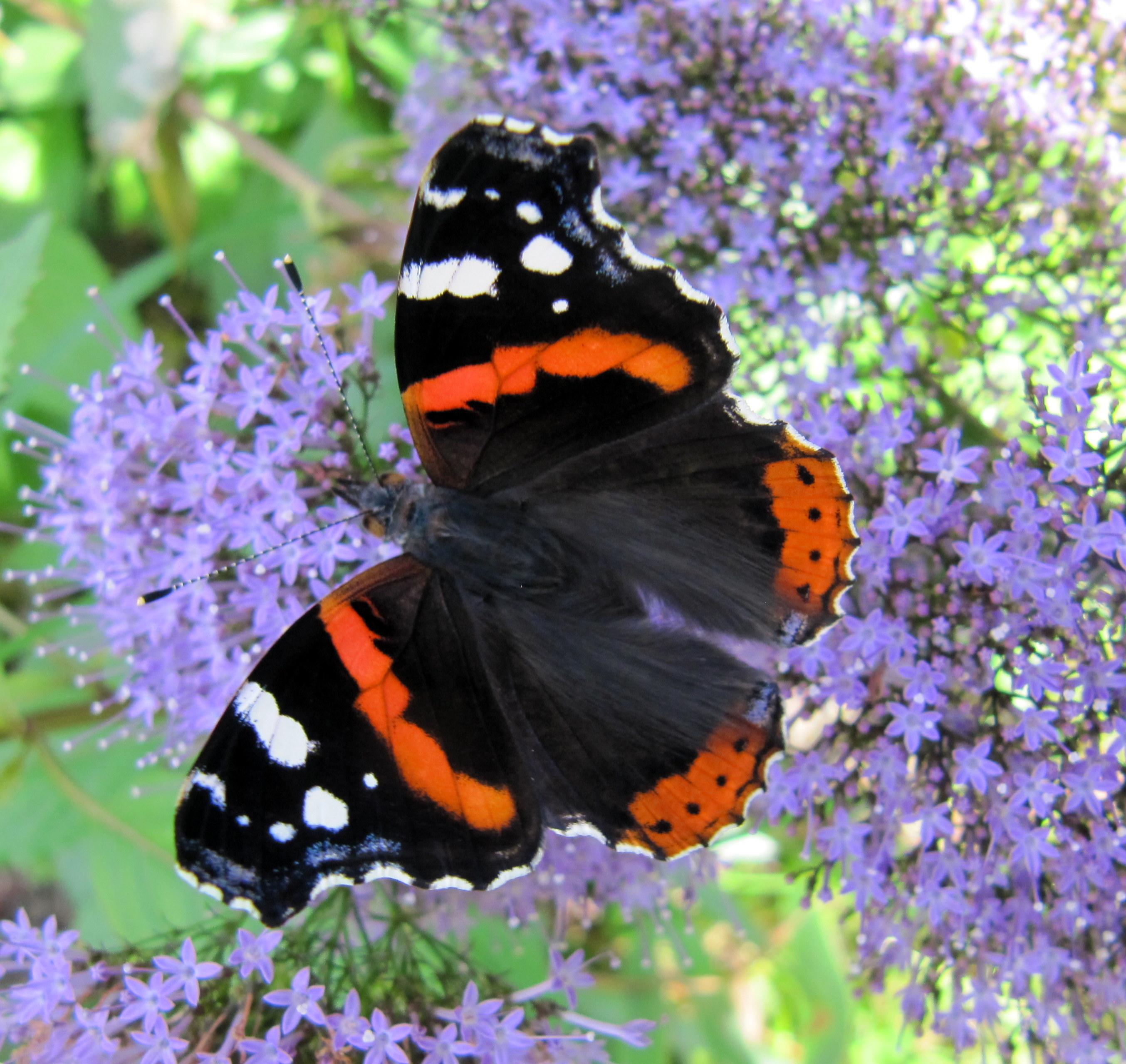 File fleurs et papillon au jardin des iris jardin des for Au jardin des plantes poem