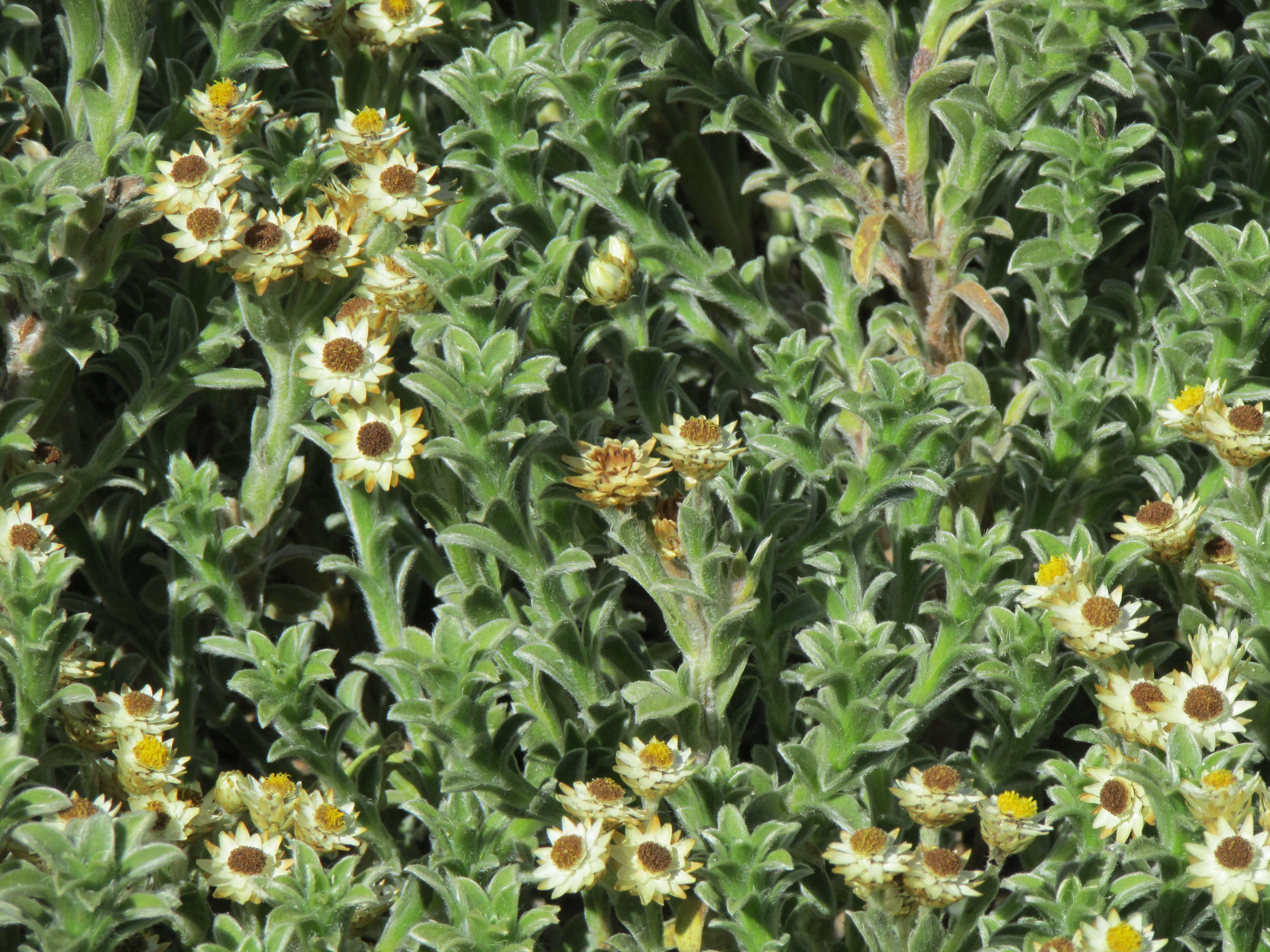 File flores en el jard n bot nico de vi a del mar 25 jpg for Jardin botanico vina