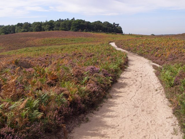 Heathland view towards Hasley Hill, New Forest - geograph.org.uk - 236204