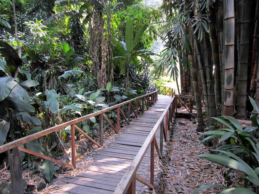 File:La Laguna Botanical Gardens (7185453222) jpg - Wikipedia