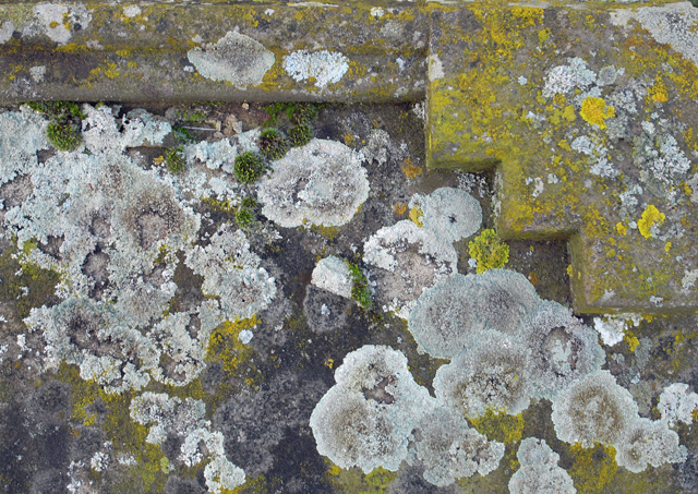 File:Lichen on Tombstone, St. John's, Croxton - geograph.org.uk - 1618153.jpg