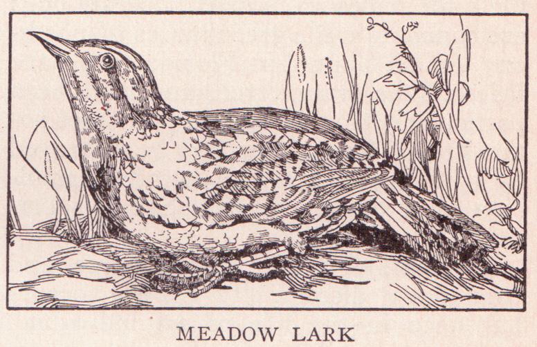 File:Meadowlark page 1805.jpg